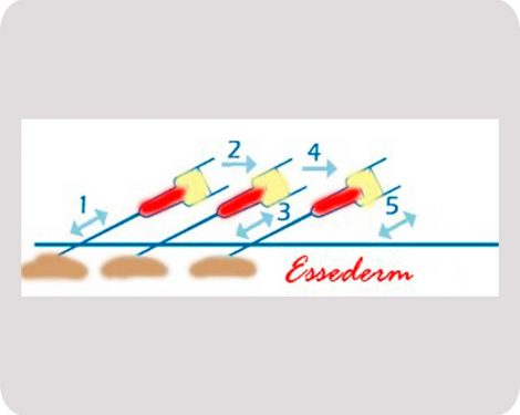 recosmo-products-essederm-lips